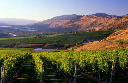 winery vineyards okanagan oliver british columbia canada view travel scenic
