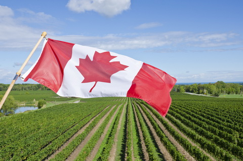 canadian flag vineyard