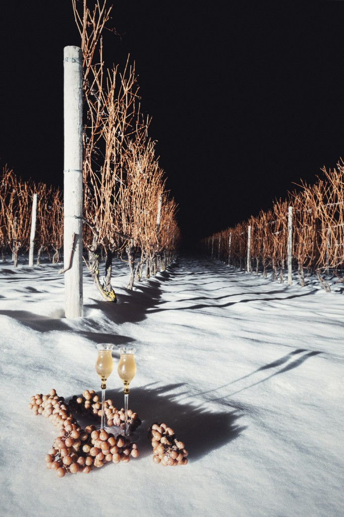 icewine nighttime vineyard xl