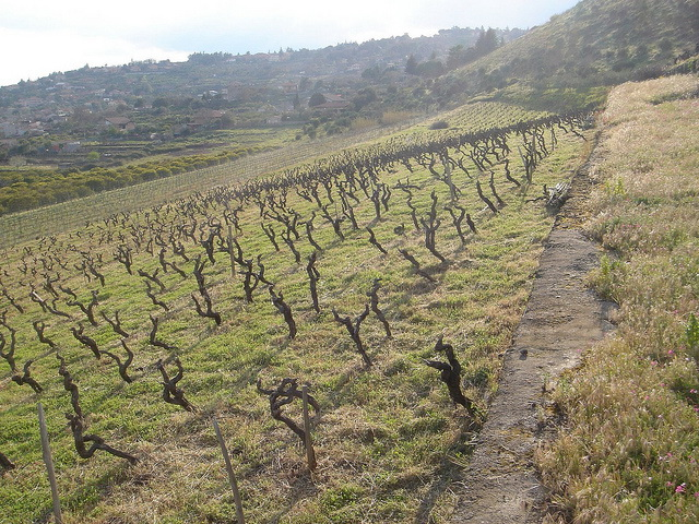 enta vines hillside