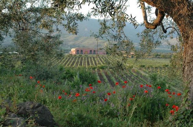 marco-garzia-winery3