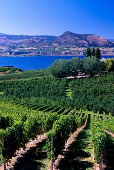 okanagan valley vineyards penticton british columbia canada