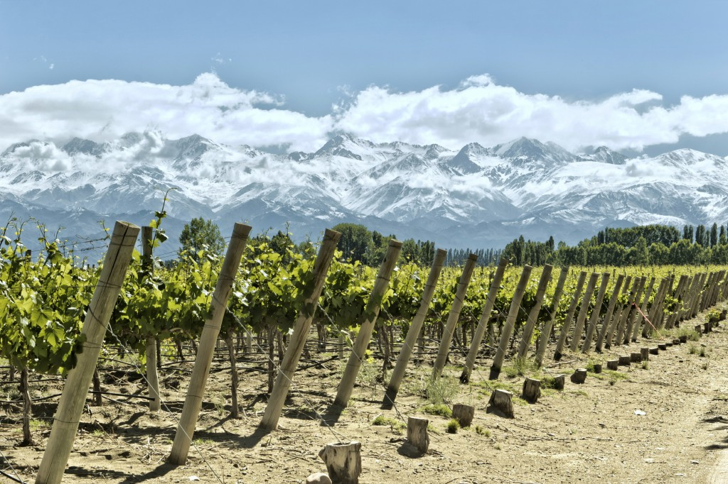 argentina vineyard andes xl