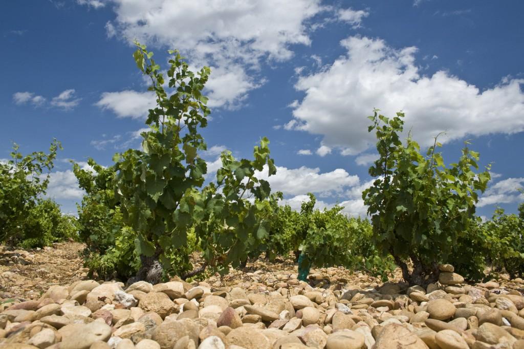 chateauneuf-du-pape vineyard xl