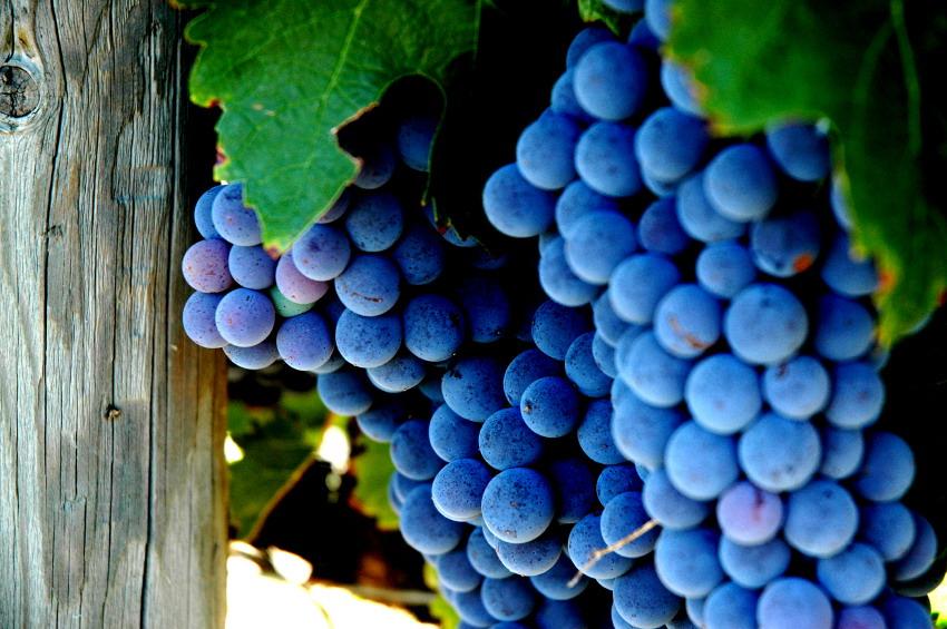 grapesandpostbig