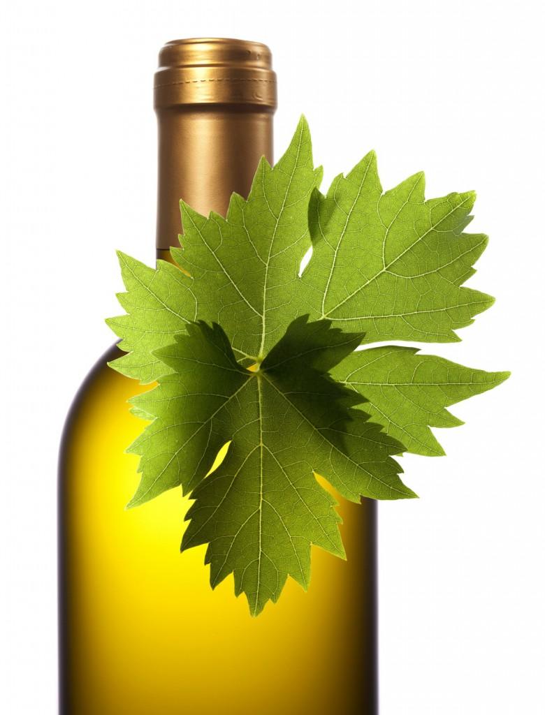 organic wine bottle xl