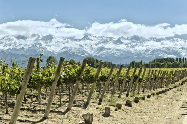 argentina vineyard andes 620