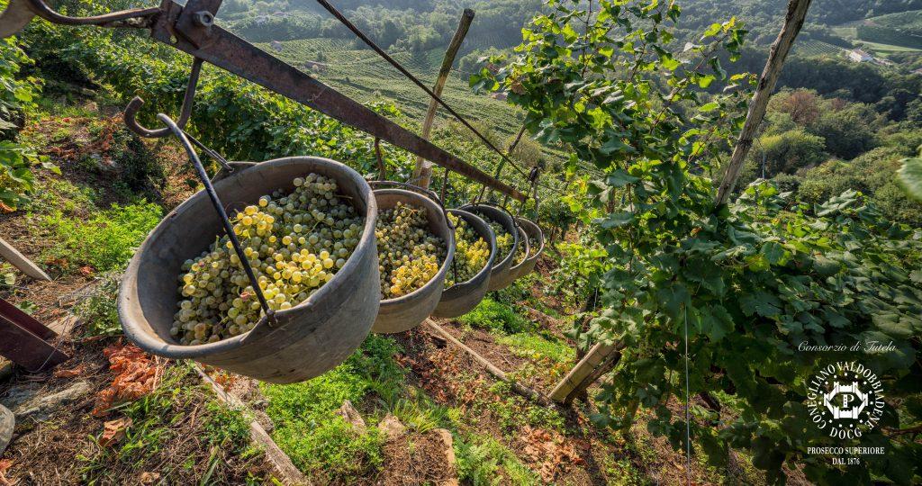 photo credits_Consorzio di Tutela del Vino Conegliano Valdobbiadene, foto di Arcangelo Piai-min (1)