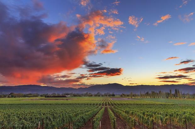 california vineyard xl