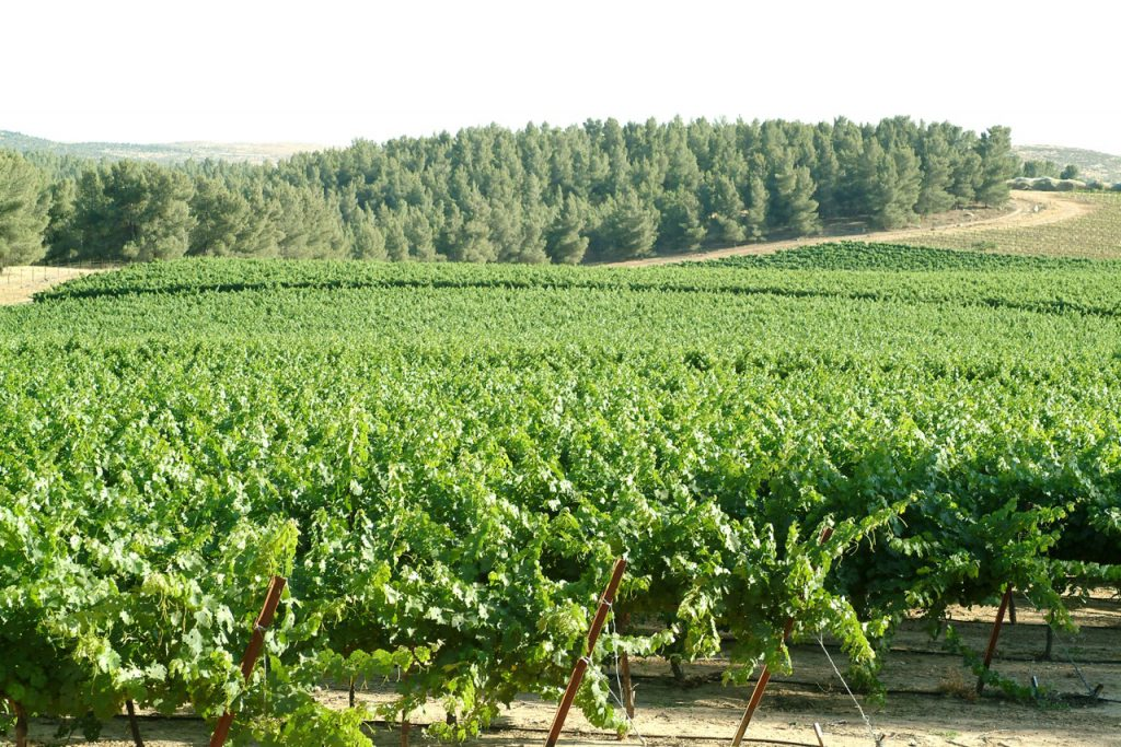 yatir-vinyards