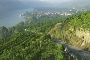The Pleasures of Austrian Wine