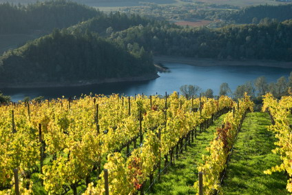 California Wineries A Look At The