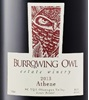 Burrowing Owl Athene 2014
