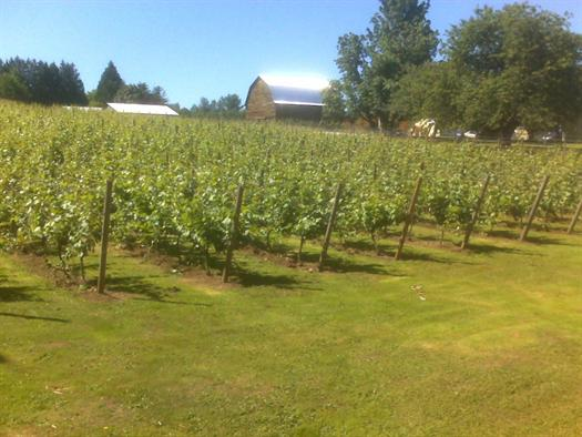 Township 7 Vineyards & Winery Langley